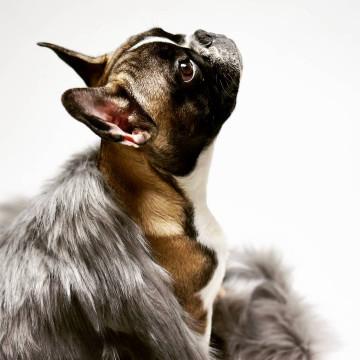 Manta para perros TÖSSE