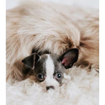 Manta para perros Föra