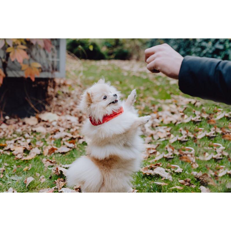 Bufanda para perros JOY