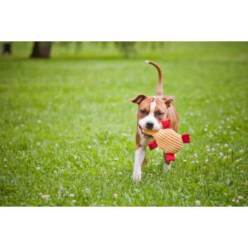 Juguete de perro ROY