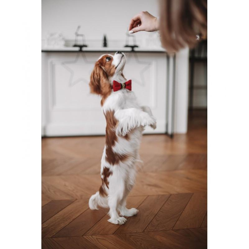 Pajarita para perro Elegance