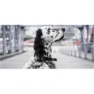 Collar para perro KOLLU
