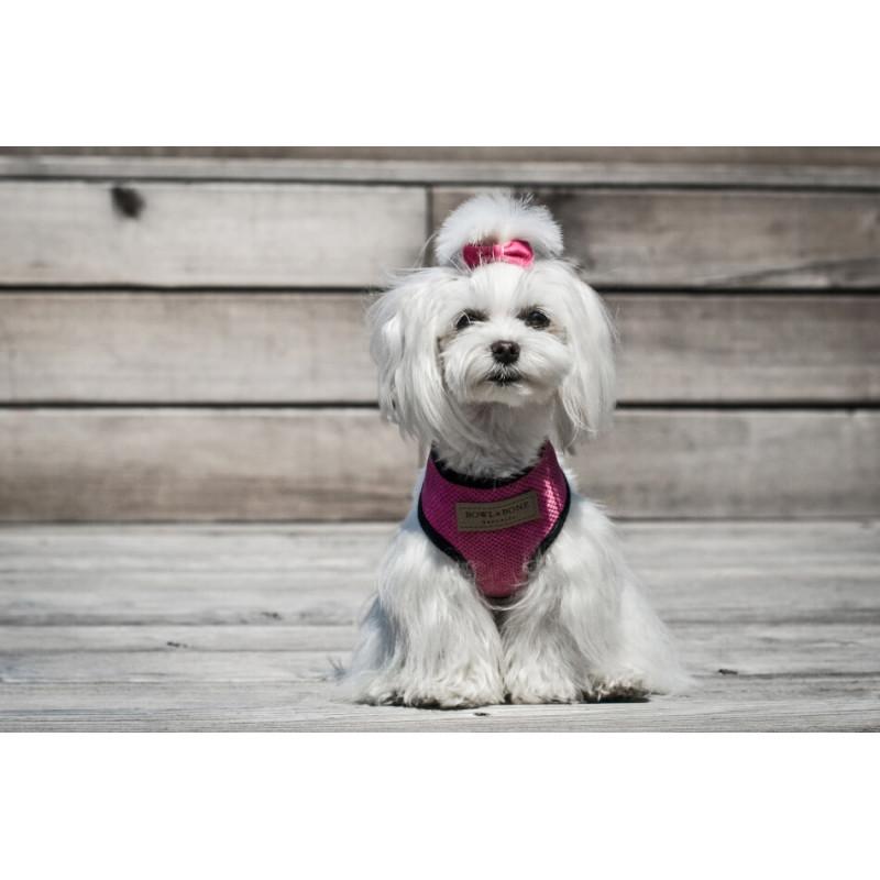 Arnés para perro Candy