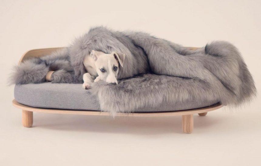 mejor cama para perro
